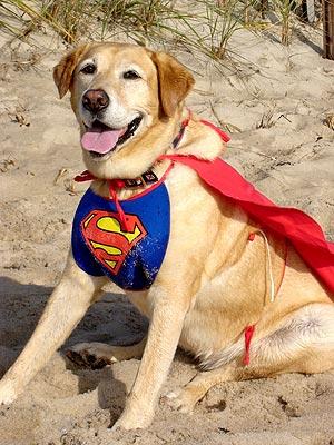 super dog program birdseyelabs